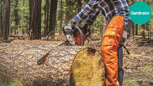 How To Cut Down A Tree: How To Fell A Tree