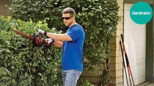 How to buy the best hedge trimmer