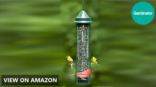 Squirrel Buster Classic vs Plus vs Standard: Wild Bird Feeder Comparison