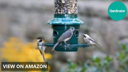 Squirrel Buster Plus vs Standard vs Classic: Wild Bird Feeder Comparison