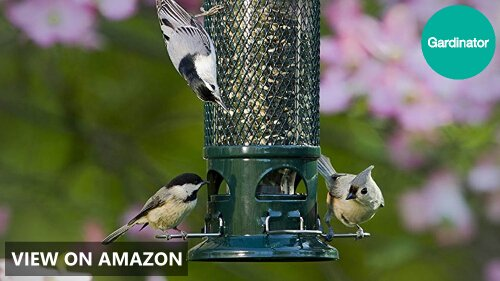 Squirrel Buster Standard vs Classic vs Plus: Wild Bird Feeder Comparison