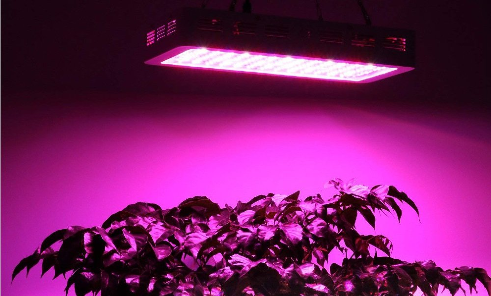 Can full spectrum lights grow plants?