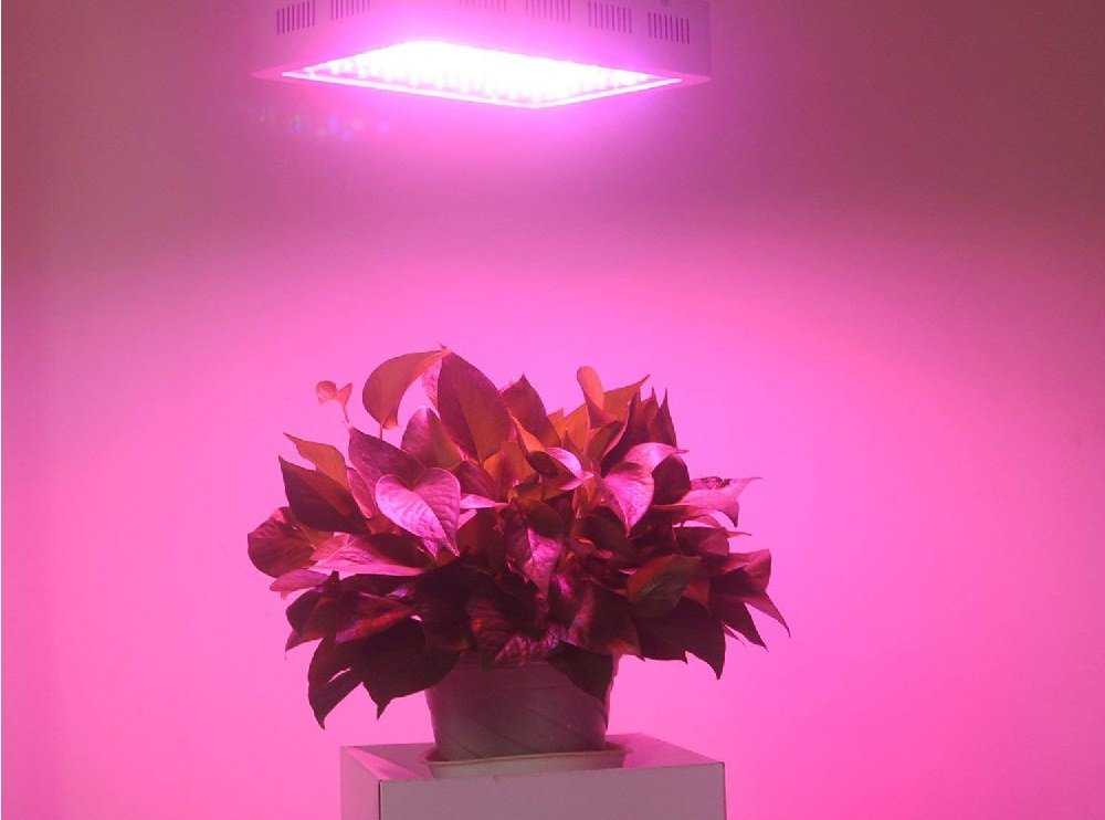 Best Grow Lights for Succulents