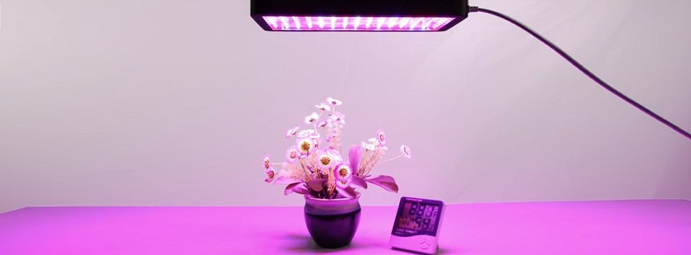Choosing A Grow Light System for Growing Tomatoes