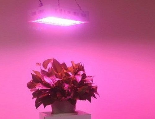 Best Horticultural LED Grow Lights: Buying Guide